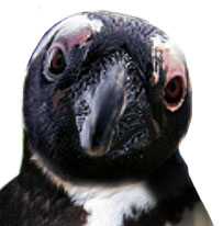 Penguin Spokesbird